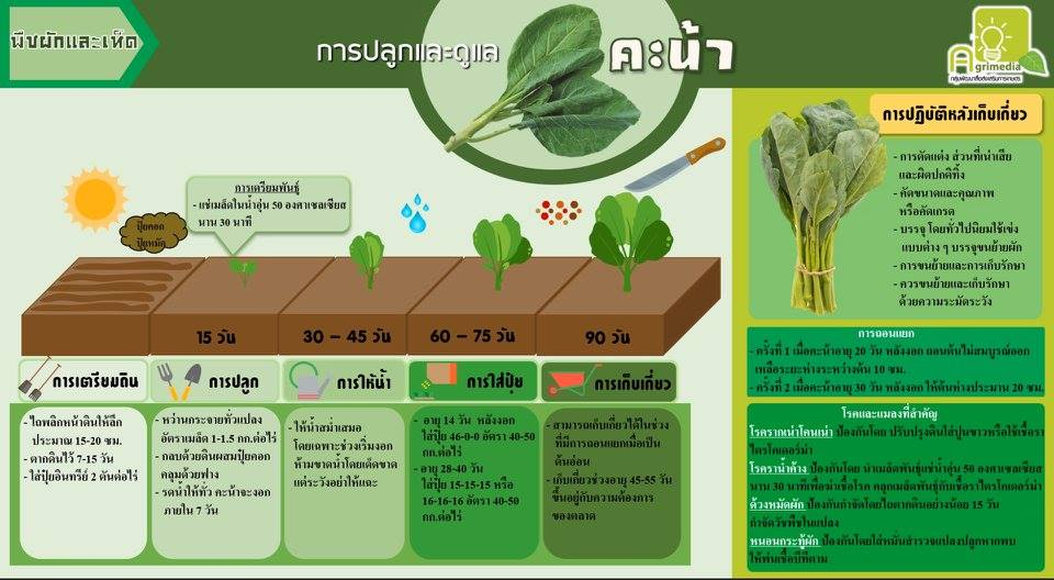 infographic การปลูกและการดูแลพืชผัก