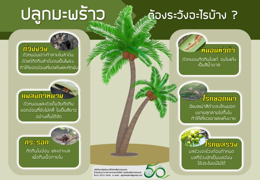 Infographic โรคและแมลงศัตรูพืช