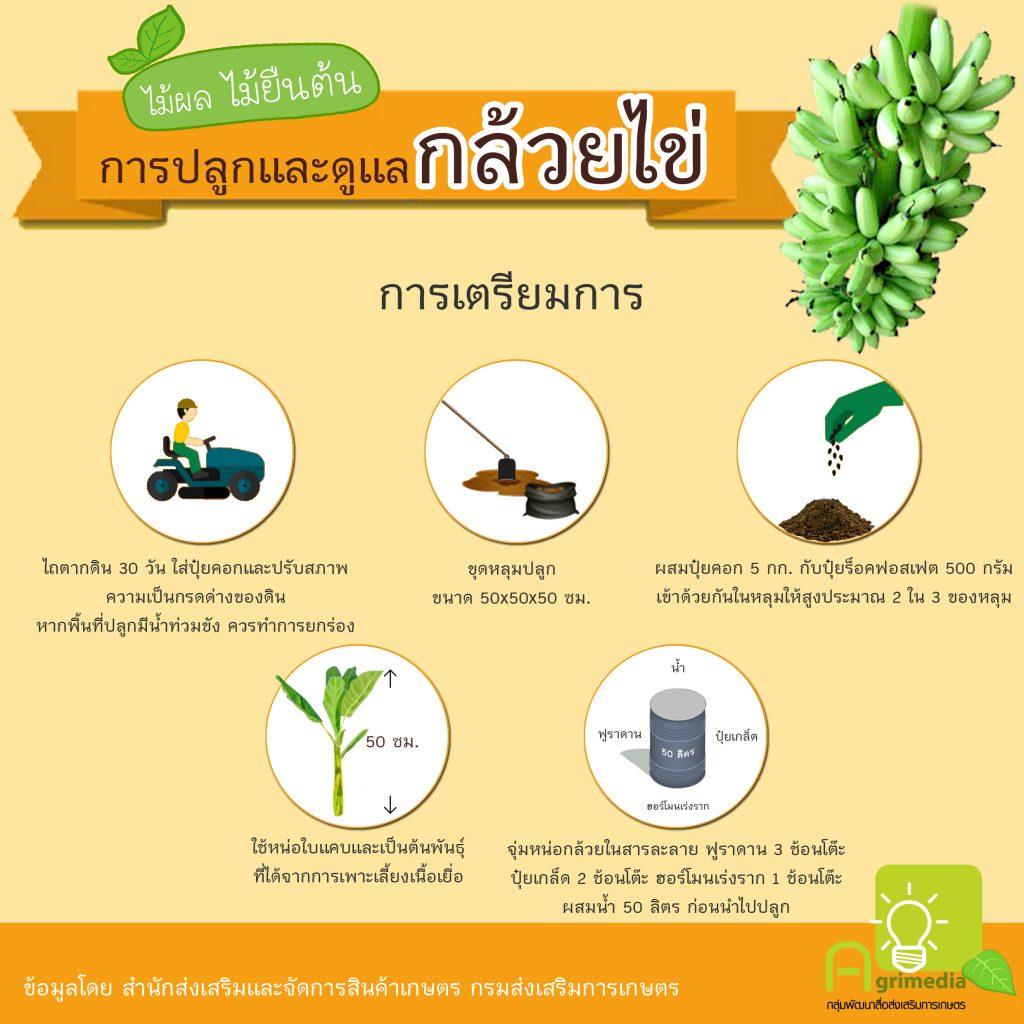 infographic การปลูกและการดูแลพืชผัก,ผลไม้