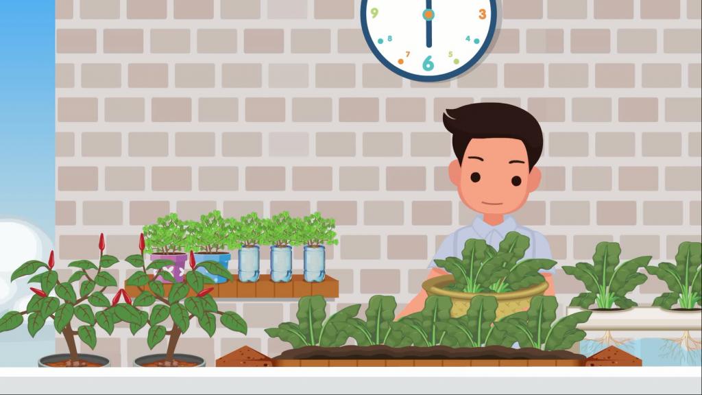 ปลูกผักได้ แม้ในพื้นที่จำกัด