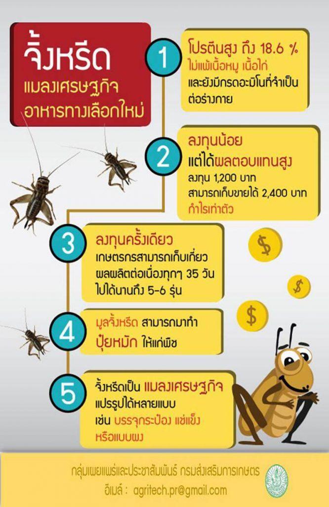 จิ้งหรีดแมลงเศรษฐกิจอาหารทางเลือกใหม่