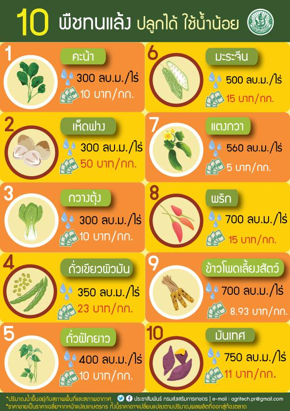 10 พืชทนแล้ง ปลูกได้ ใช้น้ำน้อย