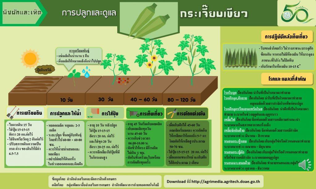 การปลูกและดูแลกระเจี๊ยบเขียว