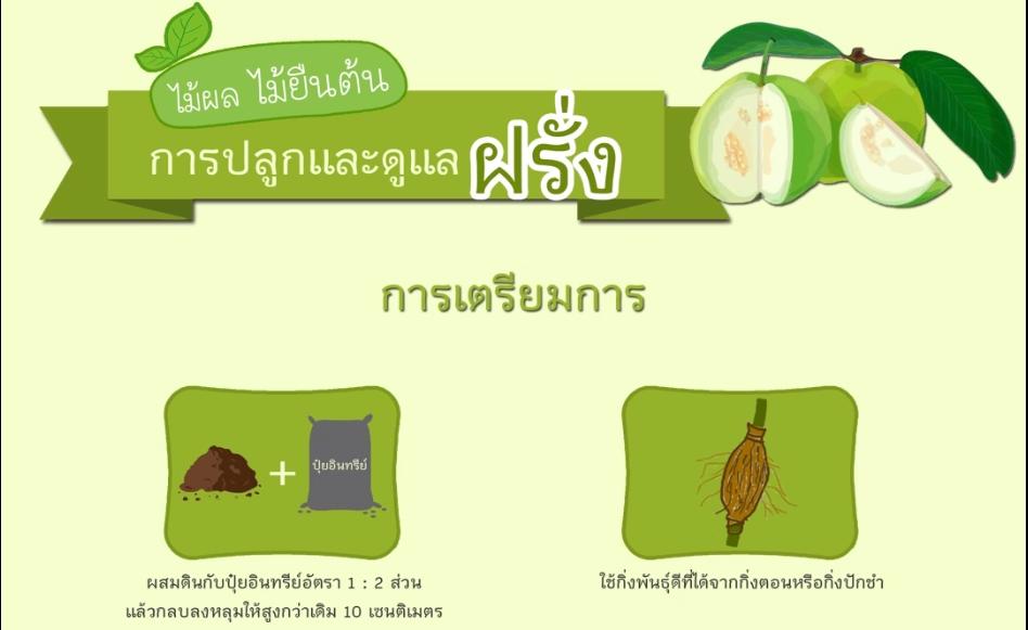 การปลูกและดูแลฝรั่ง
