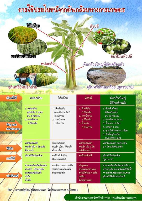 การใช้ประโยชน์จากต้นกล้วยทางการเกษตร